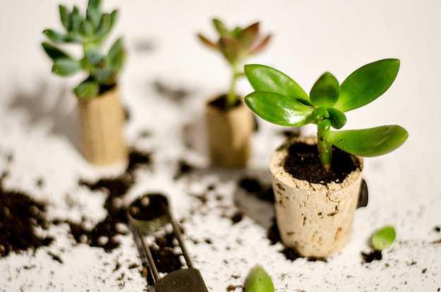 Rolha de vinho mini plantas