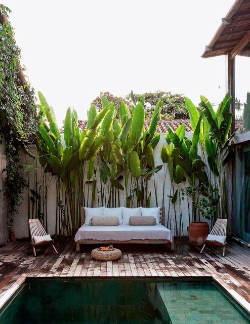 bananeiras no quintal
