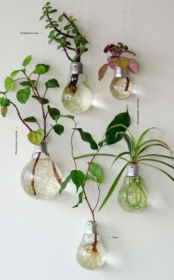 jardim de lampadas