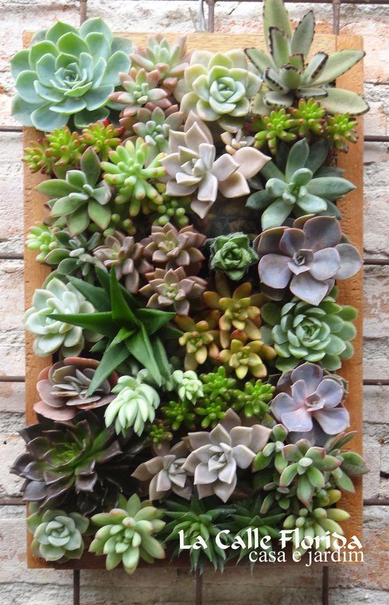 Jardim vertical veja mais de 50 modelos com fotos e for Plantas recomendadas para jardin vertical