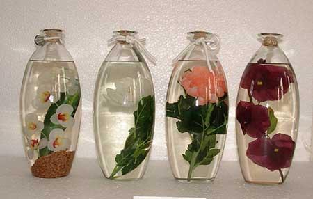 plantas-submersas