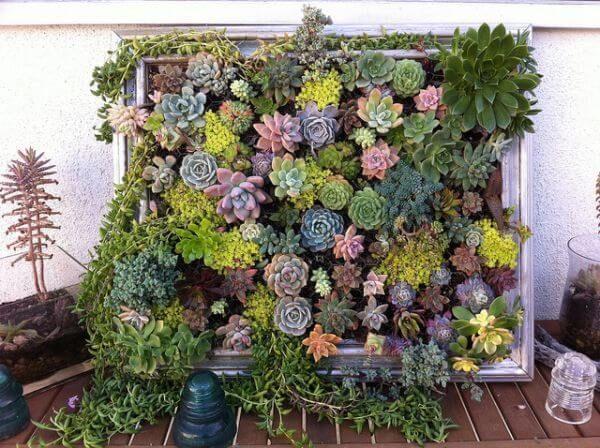 Jardim vertical de suculentas