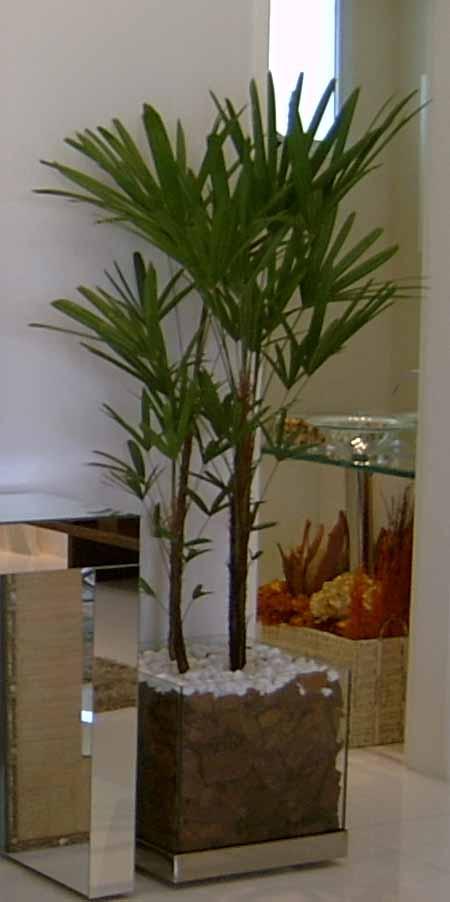 Vasos de vidro grande com folhagens