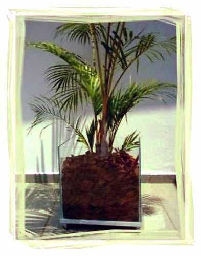 Vasos de vidro grandee