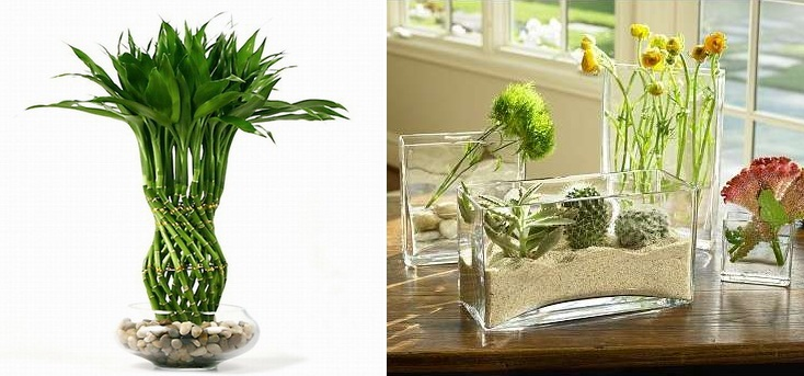 Vasos de vidro para plantas e folhagens
