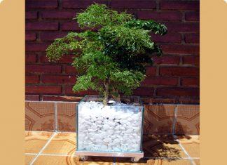Vasos de vidro para plantas e pedras brancas