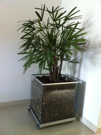 Vasos de vidro para plantas
