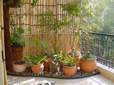 Jardim de inverno bambu
