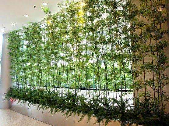 Jardim de inverno bambuu