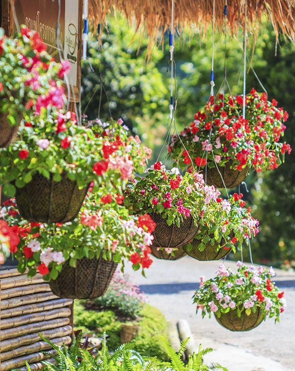 Jardins pequenos com flores