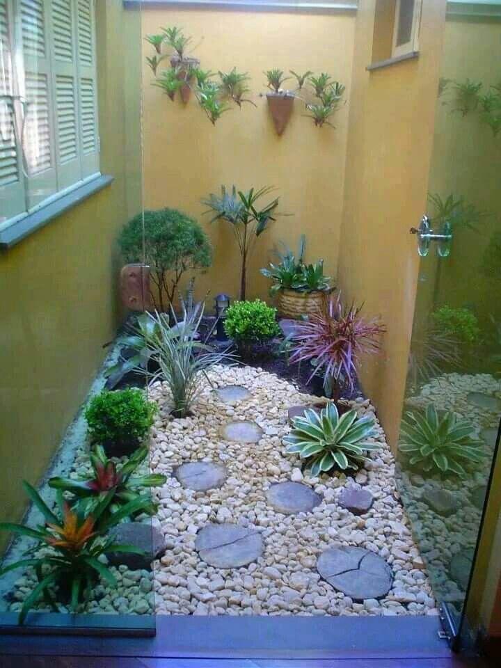 jardim de inverno com suculentas