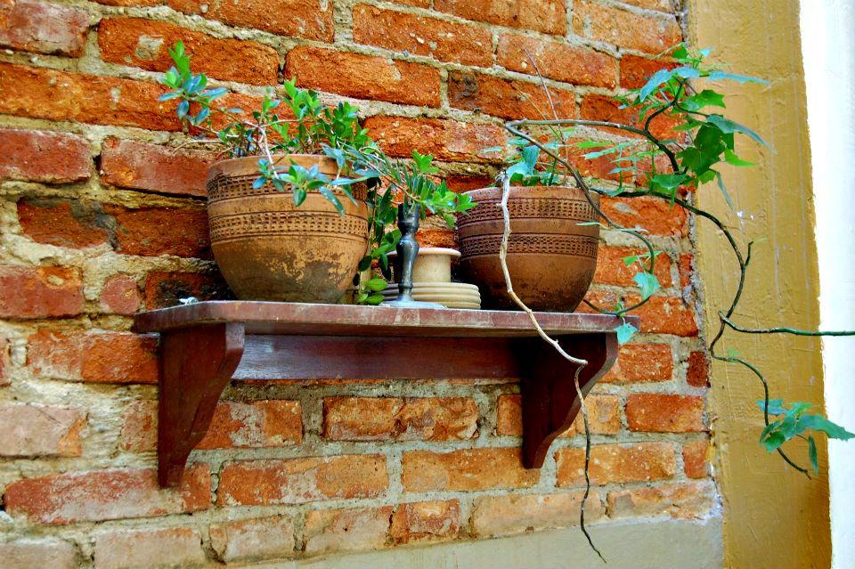 Pequenos vazinhos de plantas com mudas