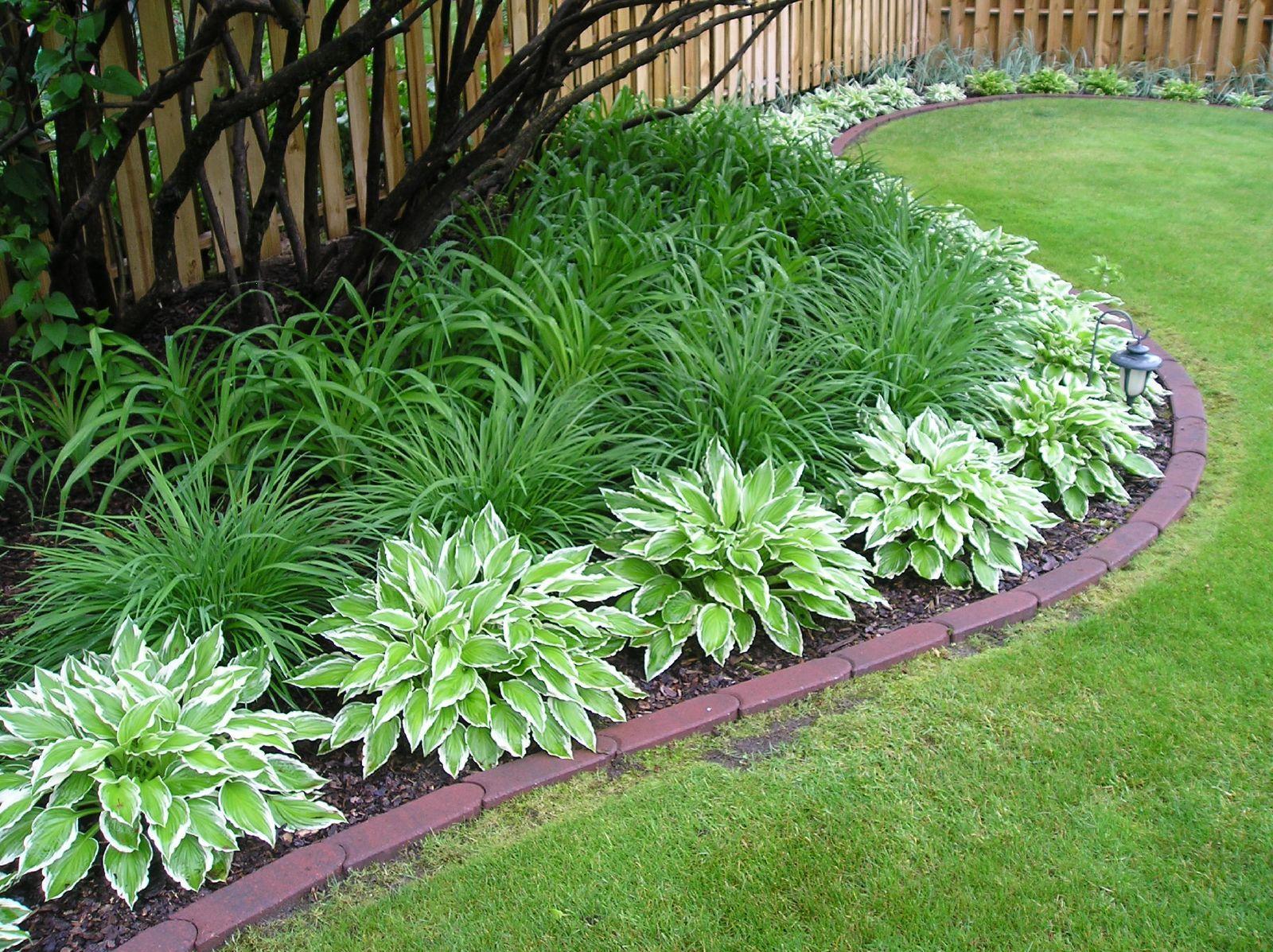 Plantas rasteiras de jardim