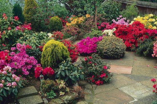 Plantas rasteiras de jardimm