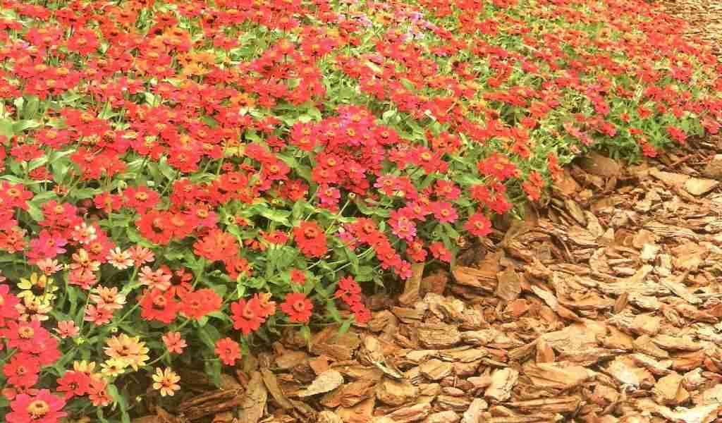 Plantas rasteiras de soll