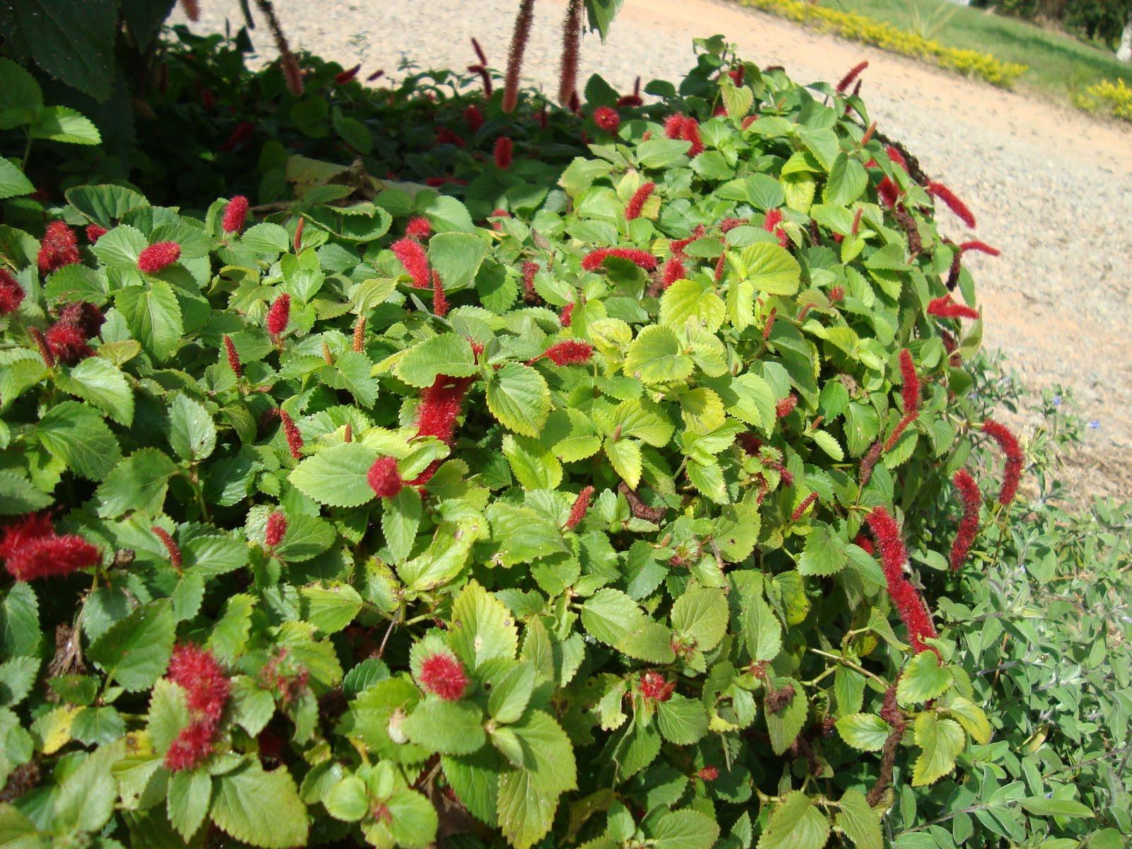 Plantas rasteiras de sombraa