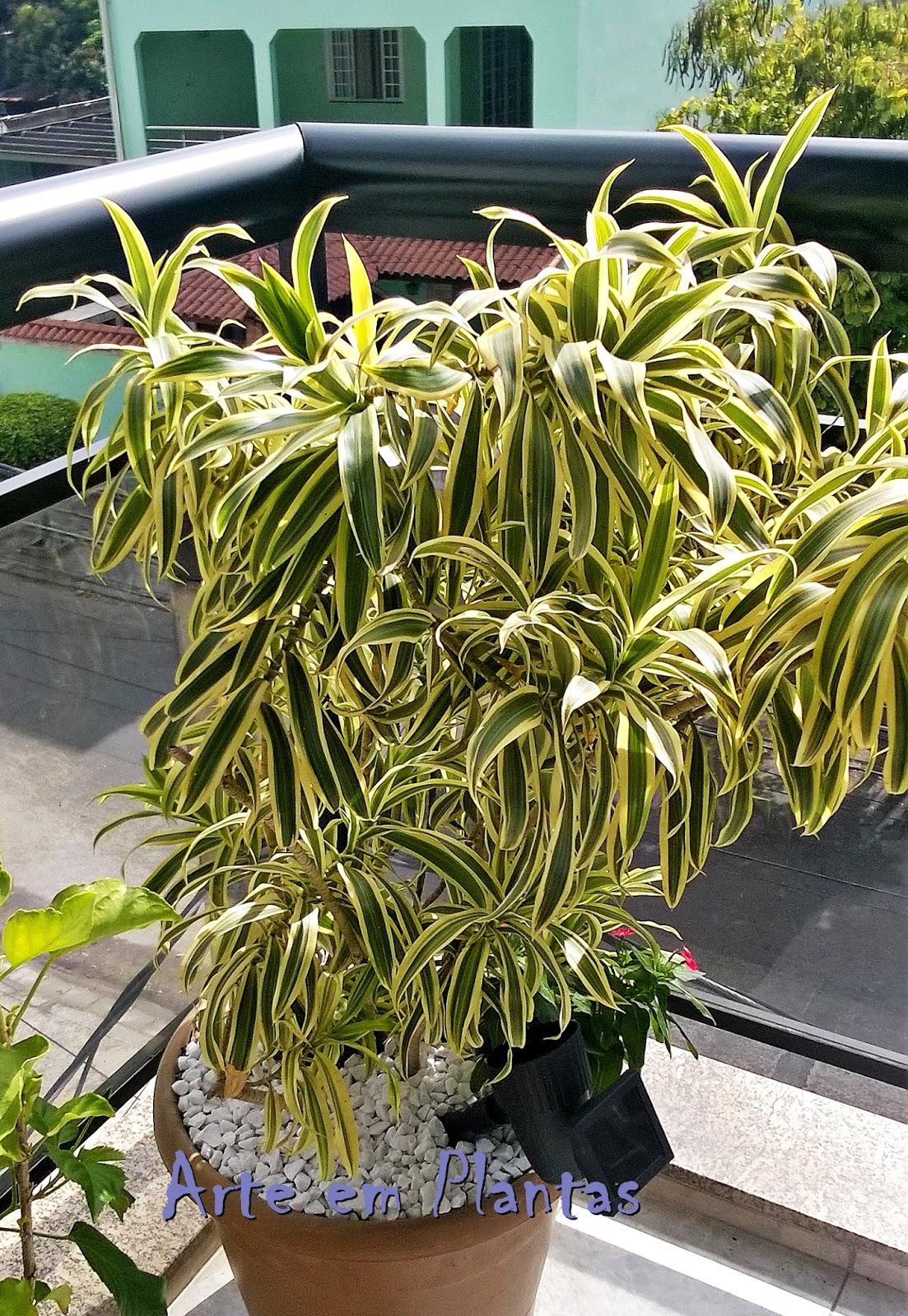 Plantas rasteiras para vasoss