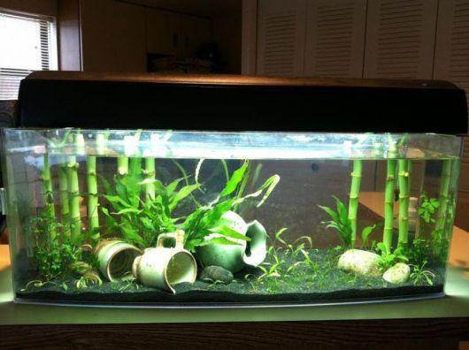 Bambu da sorte dentro do aquário