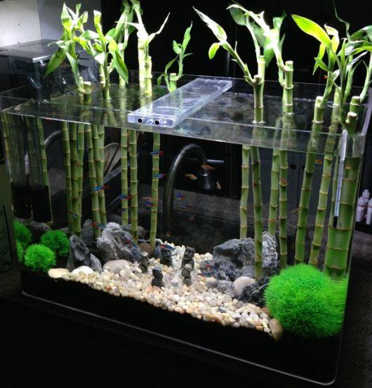 bambu no aquario