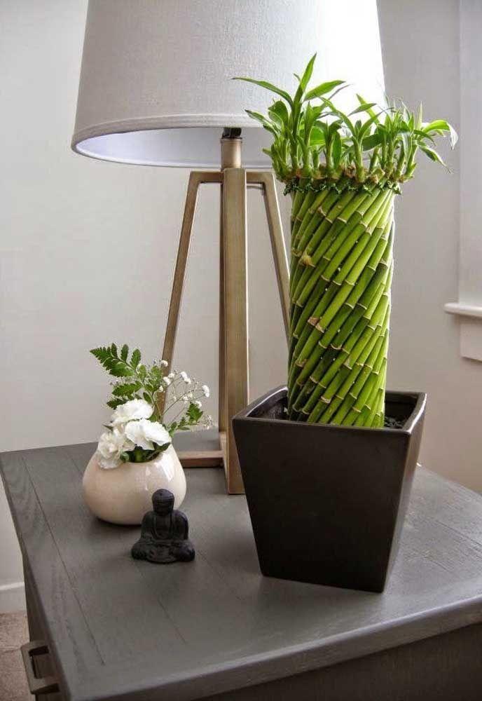 bambu traçado plantado em terra dentro do vaso