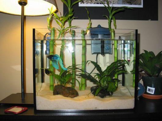 peixes e bmbu no aquario