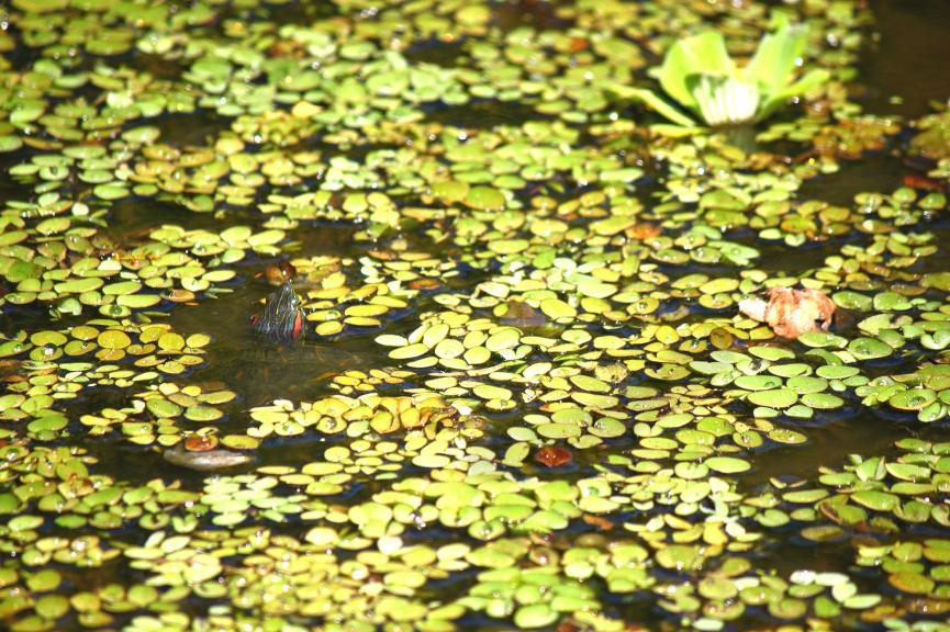 Folhagens flutuantes para seu jardim