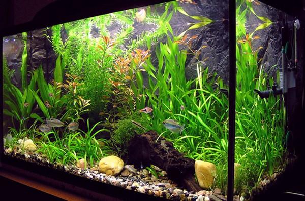 lindas folhagens dentro do aquario