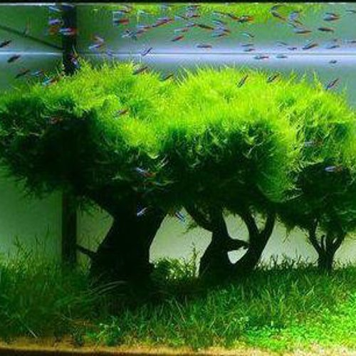 plantas dentro do aquario