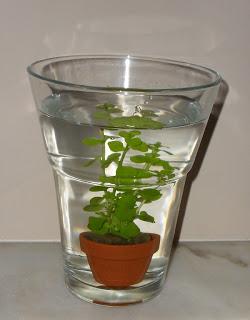 plantinha delicada dentro do vaso