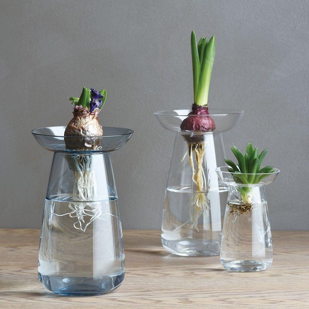 vaso transparente com pantas