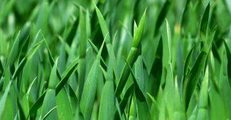 gramado fertilizado